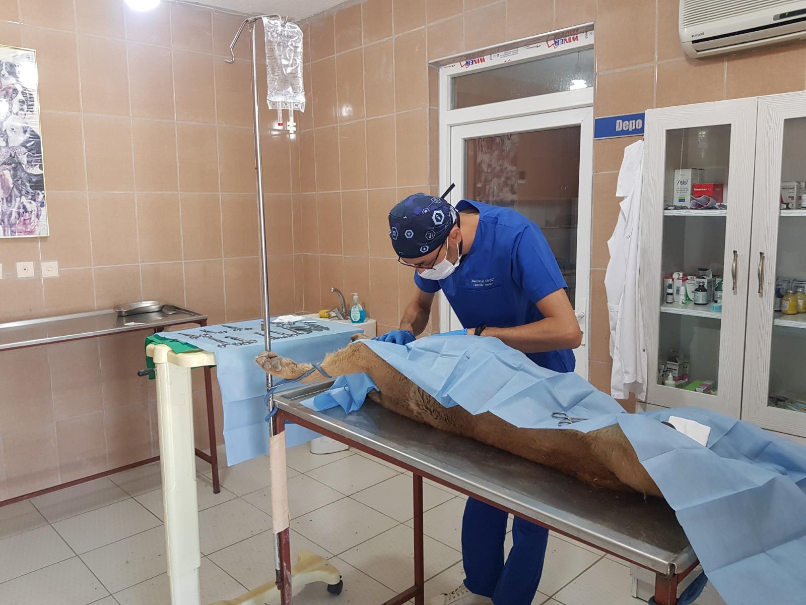 Çivril Belediyesi Sokak Hayvanlarını Tedavi Ediyor