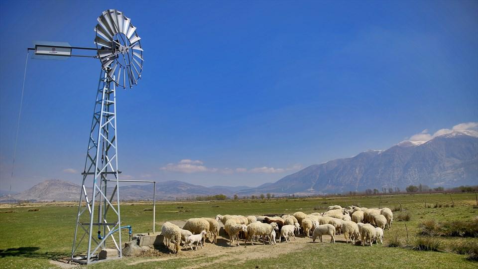 Büyükşehir'den üreticilere rüzgargülü desteği